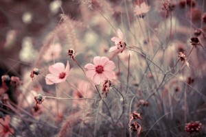 flower-meadow-45346