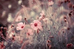 flower-meadow-45346